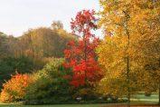 Herfst in plantentuin